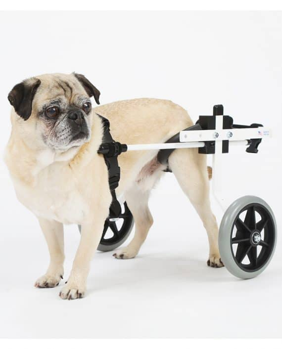 Small Dog Wheelchair for Pug