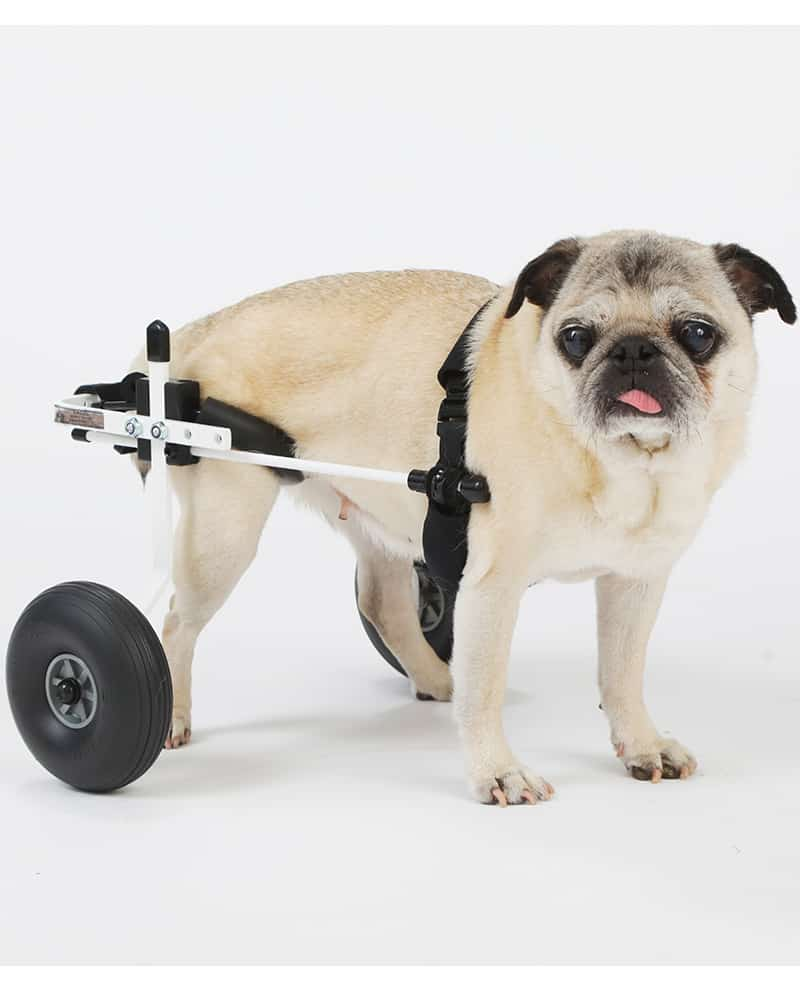 Pug XS Dog Wheelchair