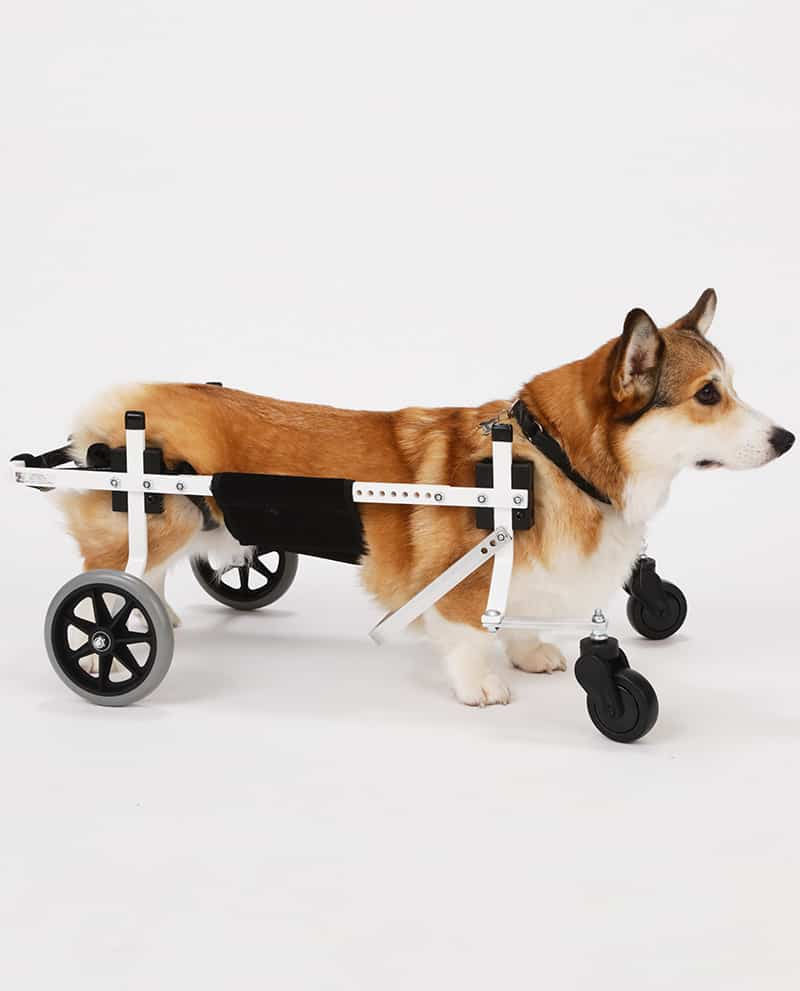 Corgi Medium Full Support Dog Wheelchair