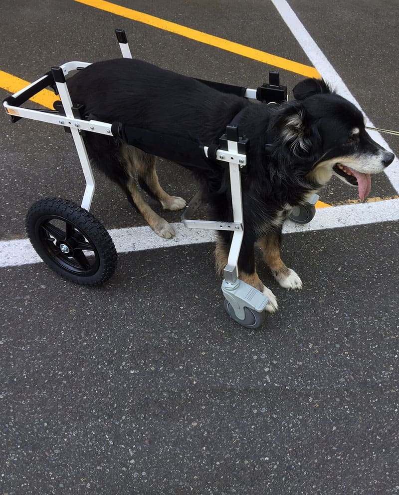 large full support dog wheelchair