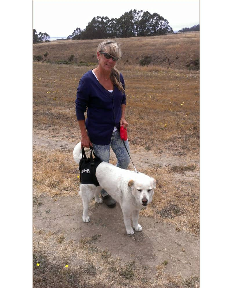 Dog on trail with Walkabout Rear airlift Harness