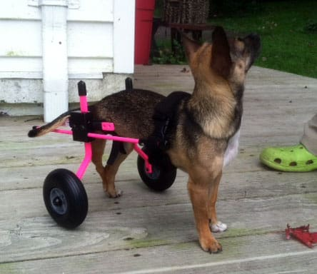 Puppy pink dog wheelchair