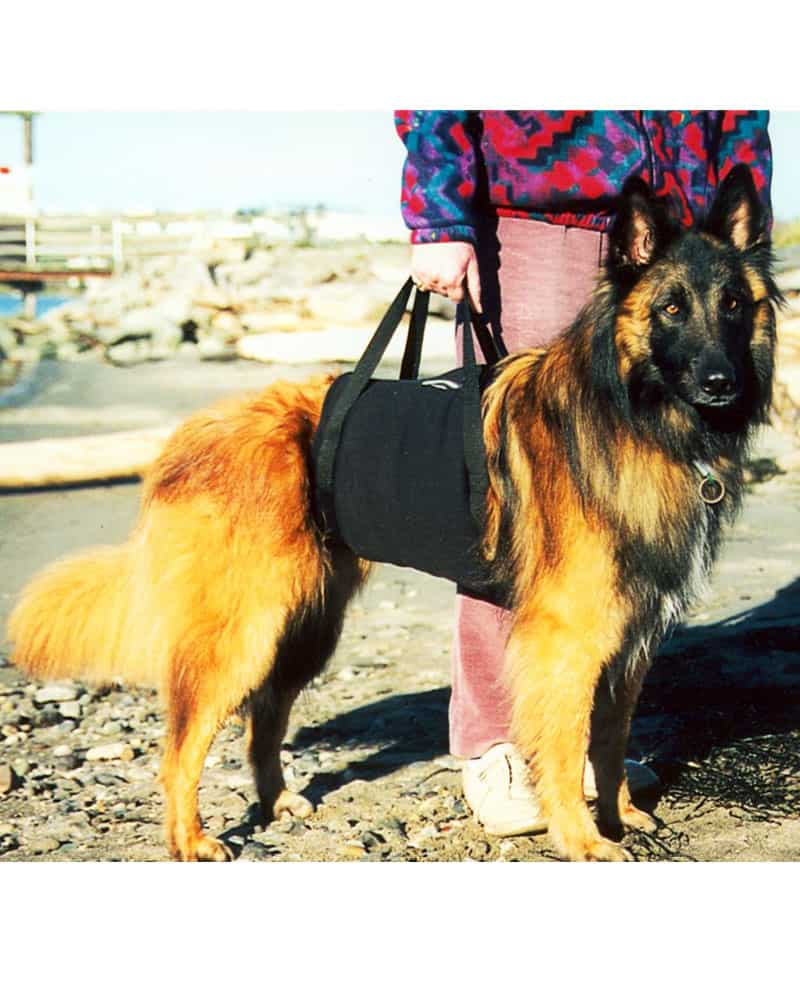 walkabout walkabelly dog harness sling