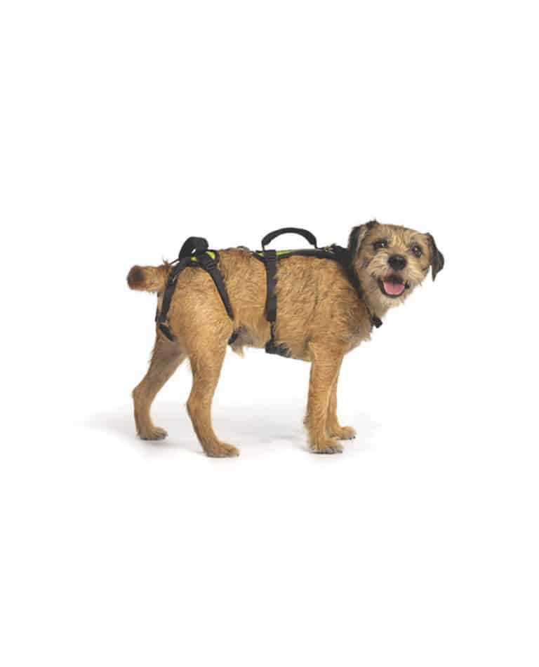 green small help em up dog harness