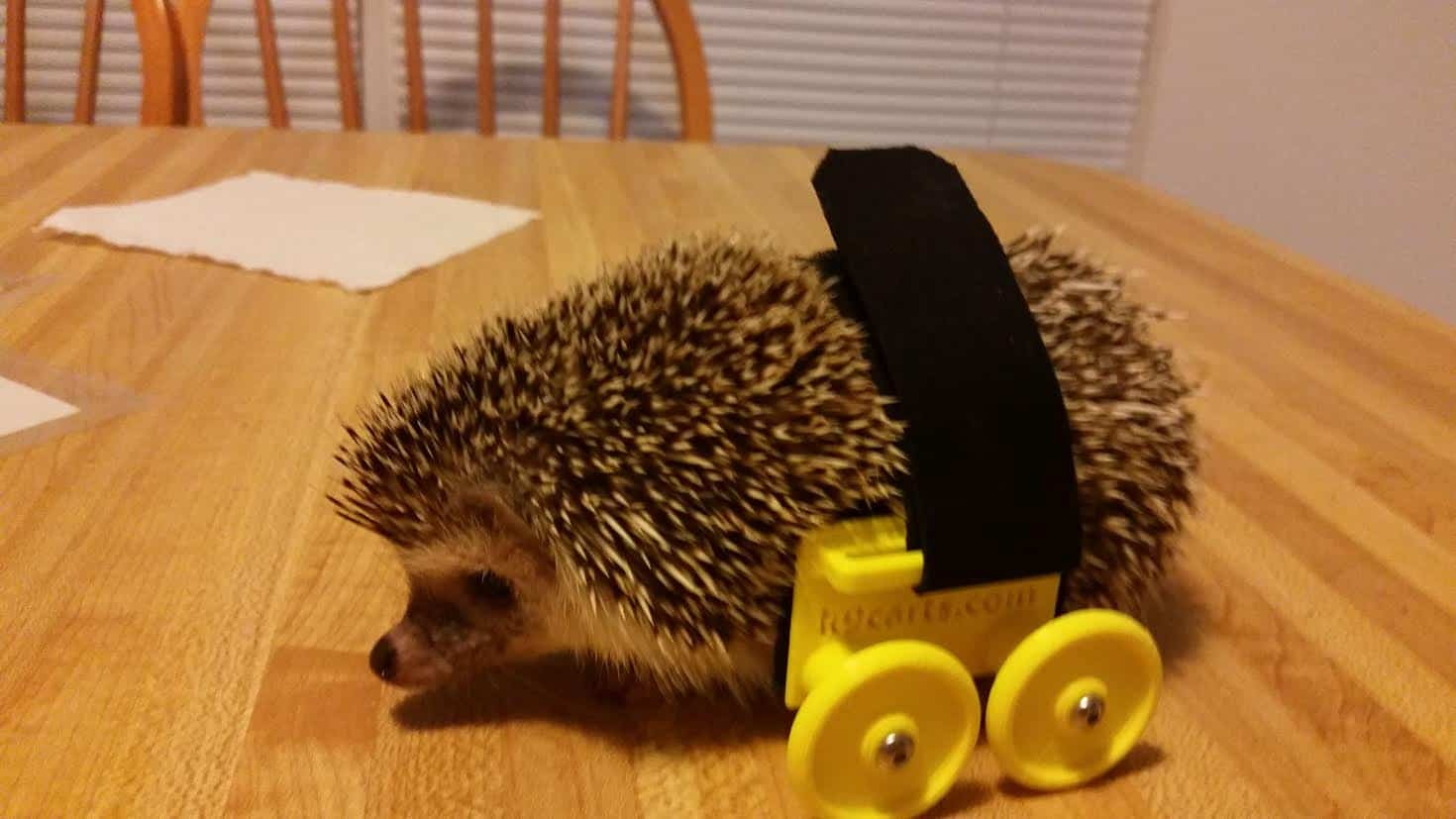 Hedgehog Wheelchair