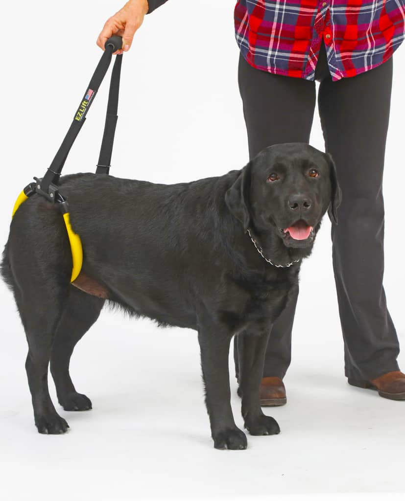 EZ Lift Rear Support Dog Sling Harness