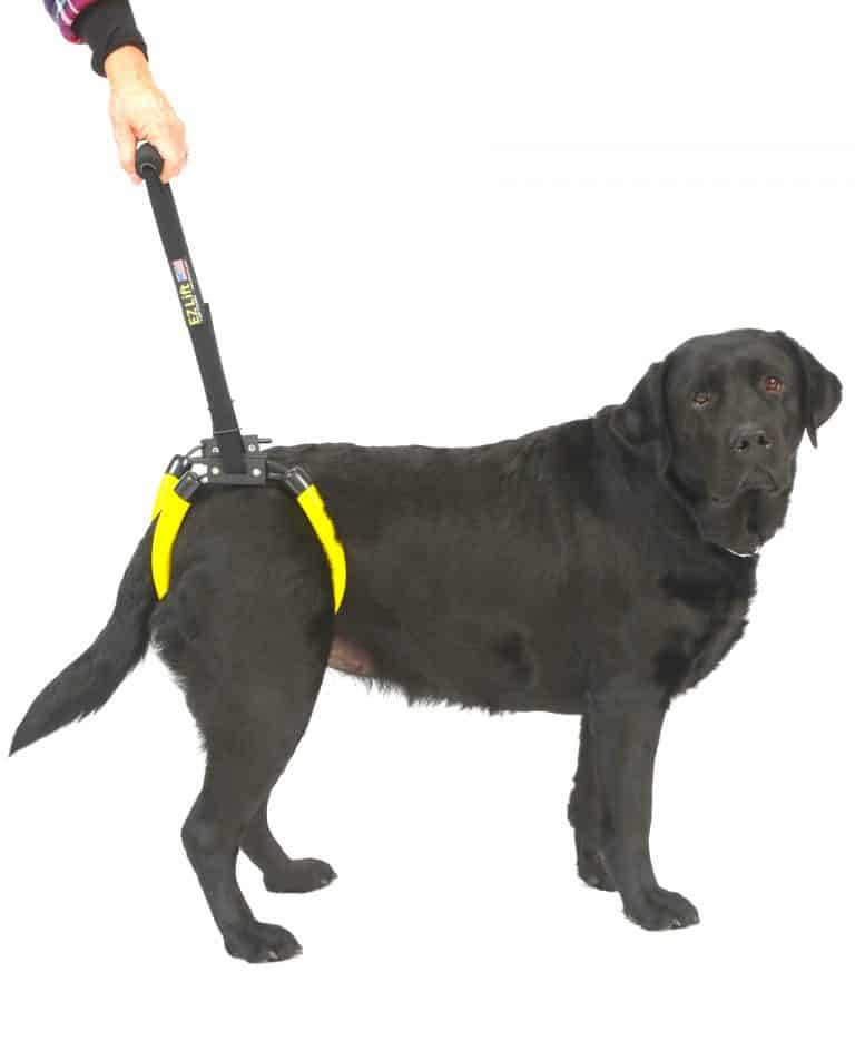 EZ Lift Large Dog Sling Harness for Rear Legs