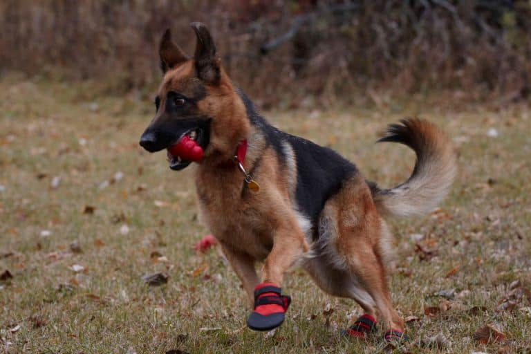 shepherd ultra paws durable protective dog boots