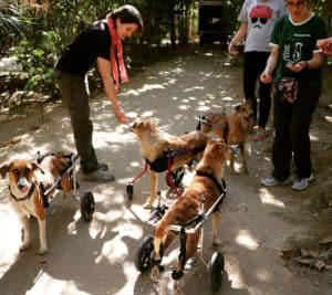 Animal Aid Unlimited Dog Wheelchair Donation