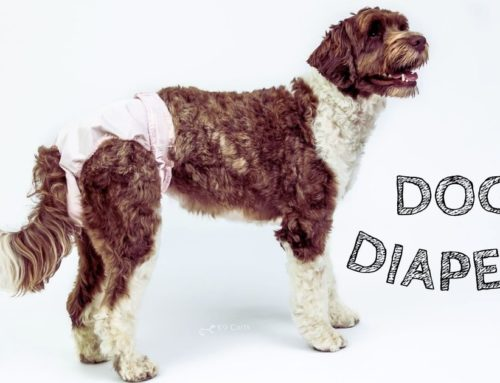 Dog Diapers: A How-To Guide to Choosing and Using Them