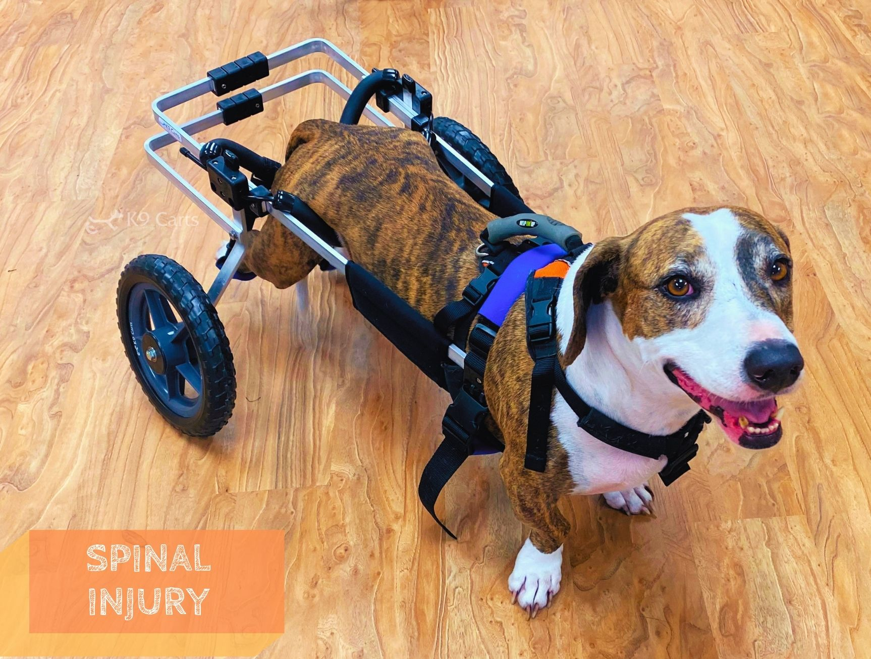 Dog with a spinal injury